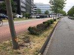 Mercedes-Fahrer vor einen Baum geprallt